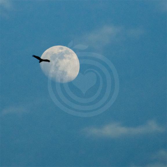 La lune en bleu