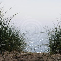 Le sentier de sable