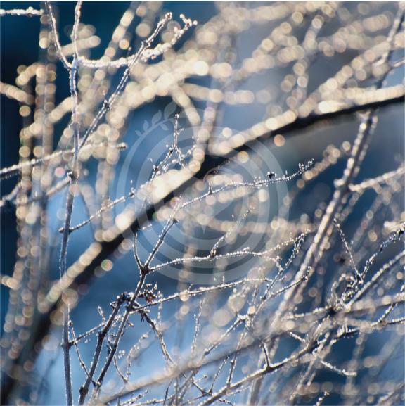 Perles d'hiver