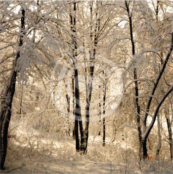 Forêt en paix